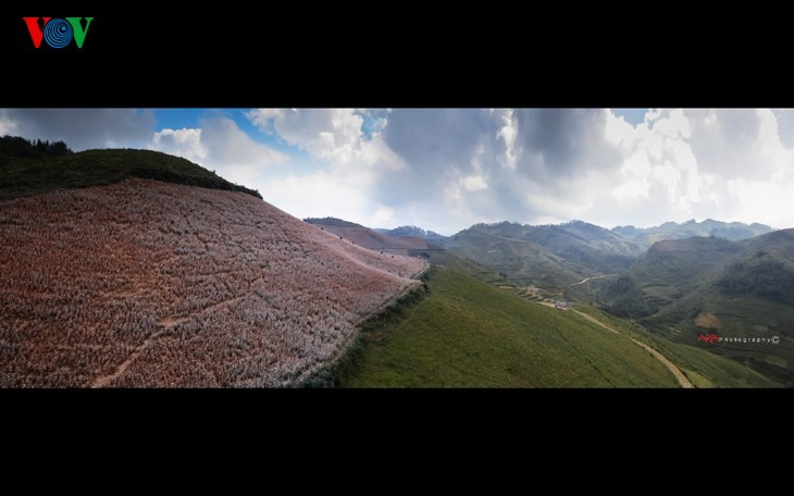 Красота цветков гречихи в горных районах Вьетнама - ảnh 13