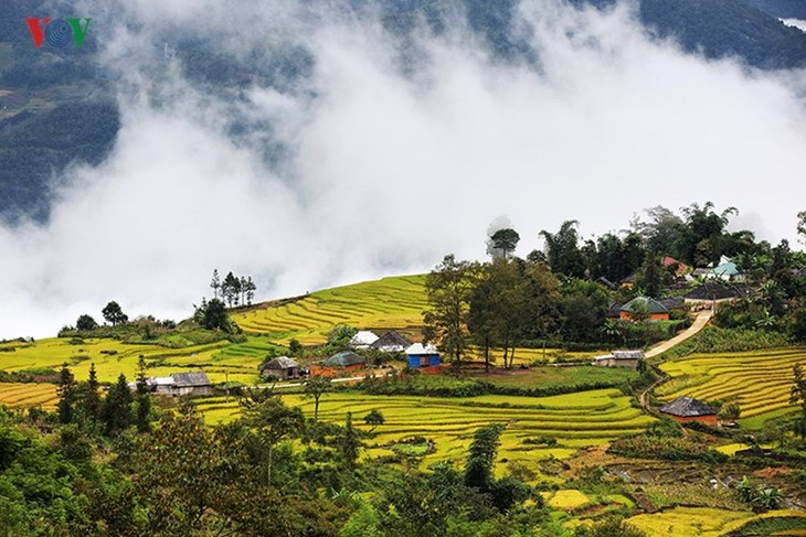 Сбор урожая риса в пограничном районе Ити - ảnh 1