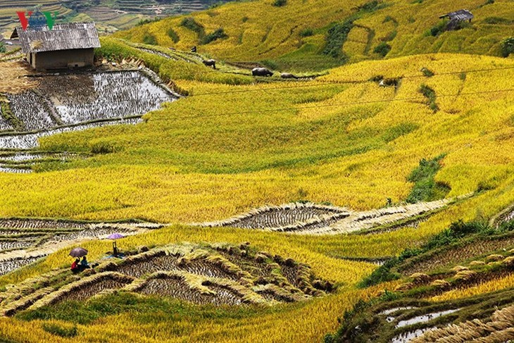 Сбор урожая риса в пограничном районе Ити - ảnh 7