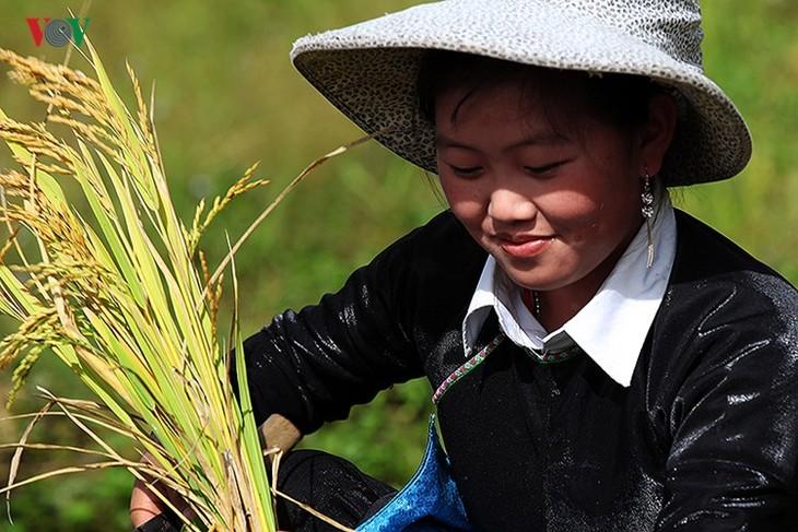 Сбор урожая риса в пограничном районе Ити - ảnh 9