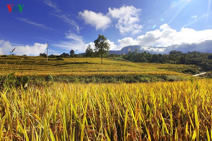 Сбор урожая риса в пограничном районе Ити - ảnh 13