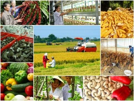 Вьетнам реструктурирует сельское хозяйство для интеграции и развития страны - ảnh 1