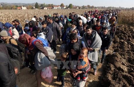 Каковы меры по разрешению миграционного кризиса? - ảnh 2