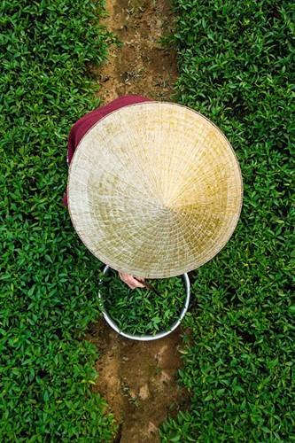 Прекрасные фотографии Вьетнама, снятые Реханом - ảnh 11