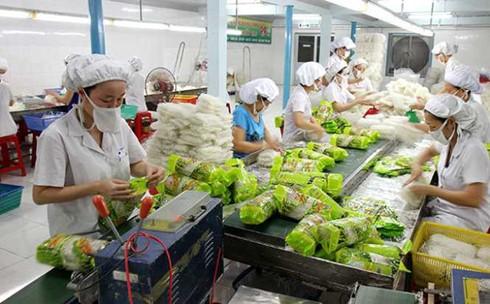 Повышение эффективности инвестиций для увеличения экспорта овощей и фруктов - ảnh 1