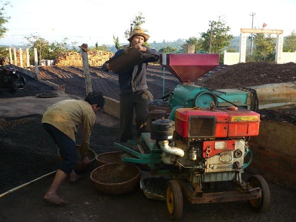 Устойчивое производство кофе в провинции Даклак - ảnh 2