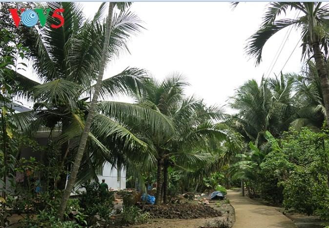 Кокосовые пальмы в провинции Бенче - ảnh 2