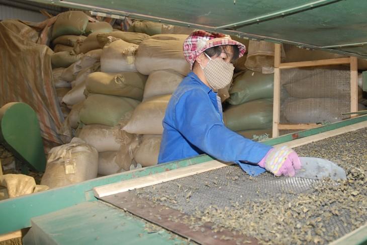 Развитие ремесленных деревень провинции Футхо - ảnh 1