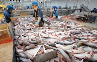 US to apply stricter regulations on catfish - ảnh 1