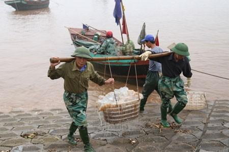 Le marché aux poissons de Giao Hai - ảnh 3