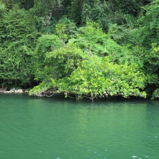 La beauté du lac de Ba Be - ảnh 10