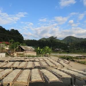 Vermicelles de tolomane, un produit d'indication géographique de Bac Kan - ảnh 4
