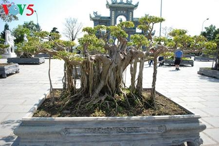 Sơn Trà, la jade de Danang - ảnh 8