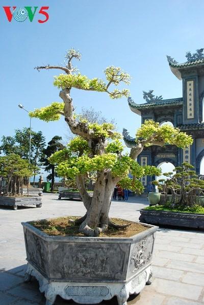 Sơn Trà, la jade de Danang - ảnh 9
