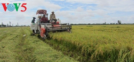 Créer des champs de grande superficie dans le delta du Mékong - ảnh 1