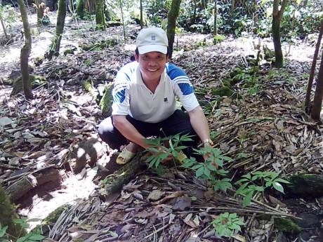 Promotion du ginseng de Ngoc Linh à l'étranger - ảnh 1