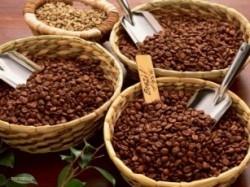 Vietnam, premier exportateur mondial du café vers un développement durable - ảnh 3