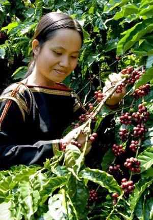 Vietnam, premier exportateur mondial du café vers un développement durable - ảnh 1
