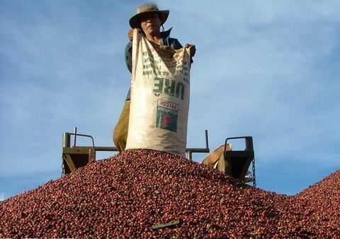 Vietnam, premier exportateur mondial du café vers un développement durable - ảnh 2