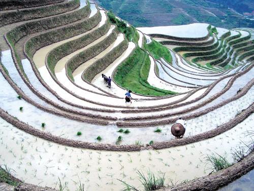 les rizi res en terrasse du nord du vietnam. Black Bedroom Furniture Sets. Home Design Ideas