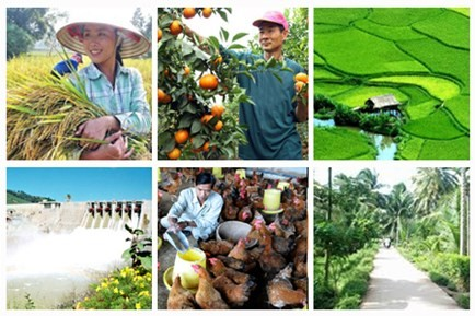 Le service agricole assure la sécurité alimentaire et améliore la physionomie rurale - ảnh 1