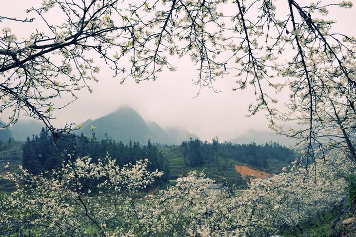 Môc Châu, un plateau fleuri toute l'année - ảnh 3