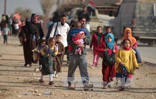 Près de 42 000 Irakiens auraient fui Mossoul selon l'OIM - ảnh 1
