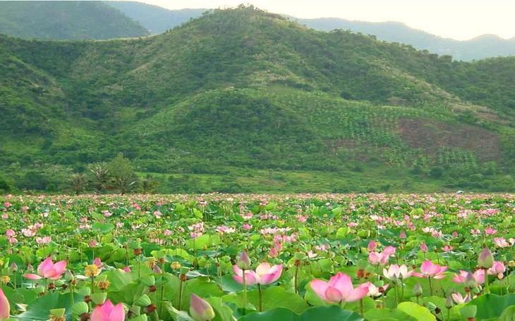 Dong Thap Muoi durant la saison des crues : un enchantement - ảnh 3