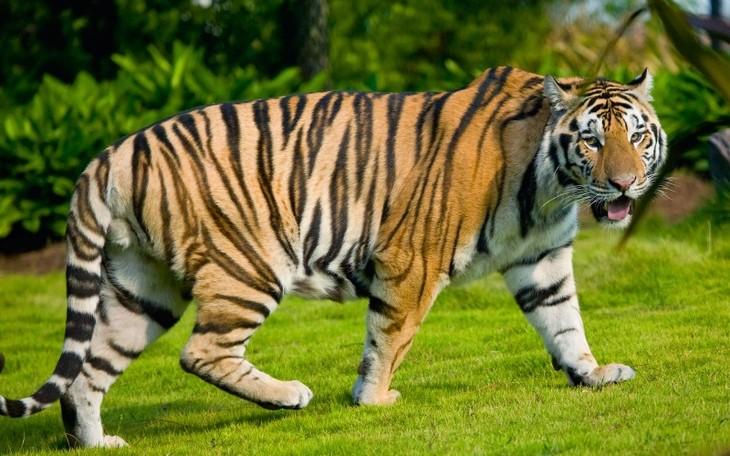 Animaux menacés d'extinction au Vietnam - ảnh 2