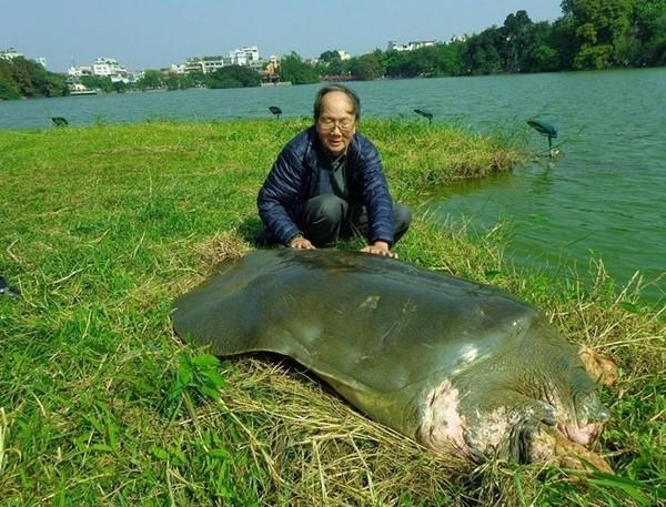Animaux menacés d'extinction au Vietnam - ảnh 10
