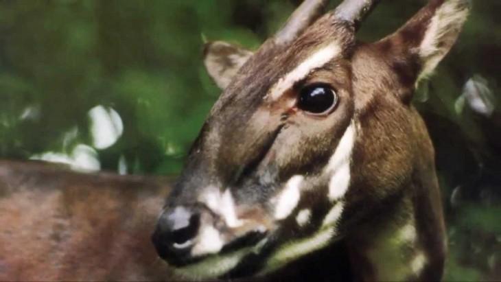 Animaux menacés d'extinction au Vietnam - ảnh 3
