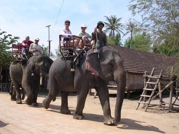Animaux menacés d'extinction au Vietnam - ảnh 7