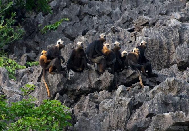 Animaux menacés d'extinction au Vietnam - ảnh 6