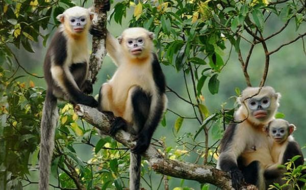 Animaux menacés d'extinction au Vietnam - ảnh 5