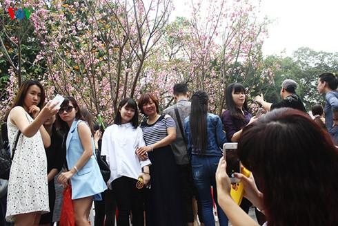 2016年樱花节在河内升龙皇城举行 - ảnh 1