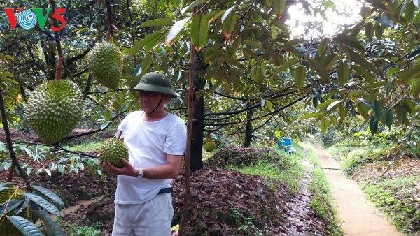 面对融入国际挑战的九龙江平原农业 - ảnh 1