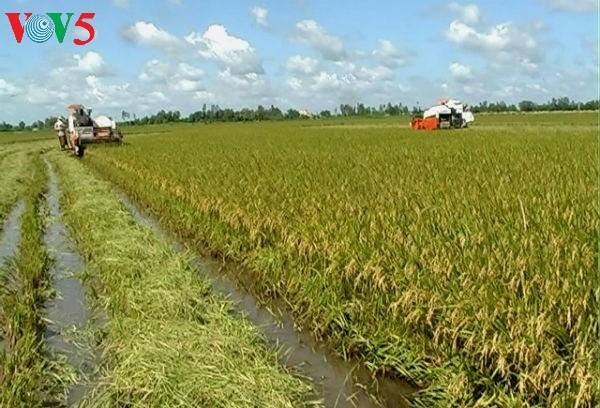 面对融入国际挑战的九龙江平原农业 - ảnh 2