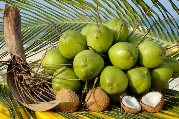越南南部椰子价格猛涨 - ảnh 1