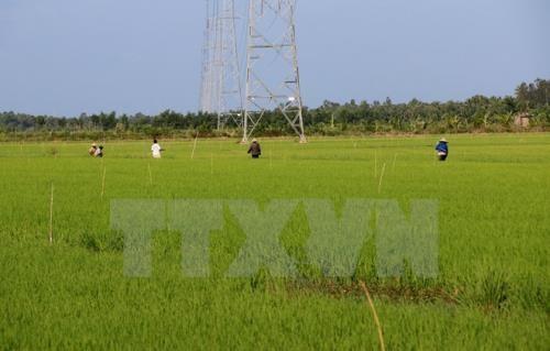 放宽九龙江平原农业用地拥有量限制面向大生产 - ảnh 2