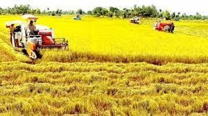 放宽九龙江平原农业用地拥有量限制面向大生产 - ảnh 1