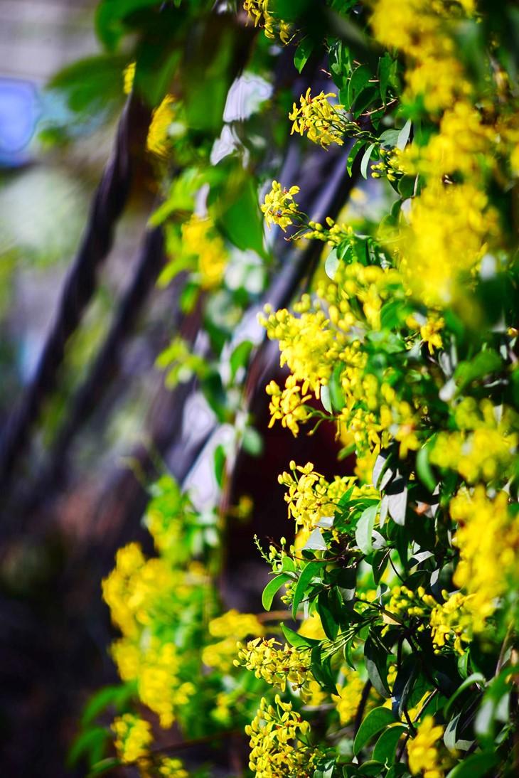 河内缤纷多彩的夏季花卉 - ảnh 11