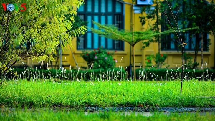 河内缤纷多彩的夏季花卉 - ảnh 12