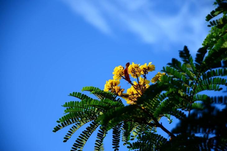 河内缤纷多彩的夏季花卉 - ảnh 13