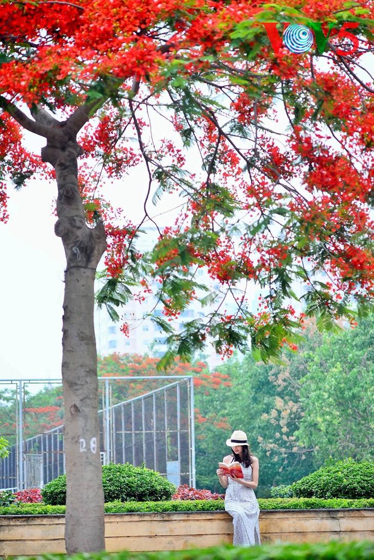 河内缤纷多彩的夏季花卉 - ảnh 6