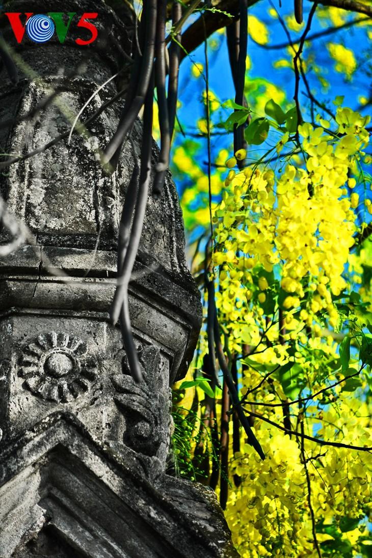 河内缤纷多彩的夏季花卉 - ảnh 9