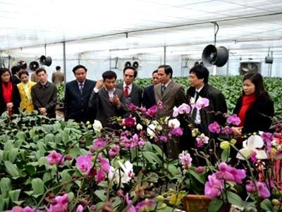Ejemplifica éxito de nuevo campo Cooperativa de floricultura de Thuy Huong - ảnh 2