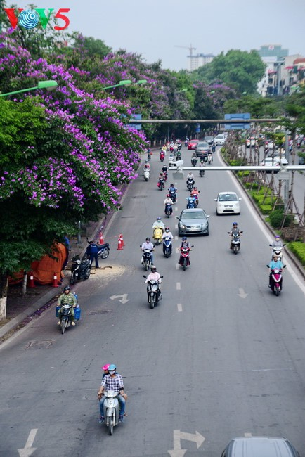 Colorful flowers in Hanoi summer - ảnh 1