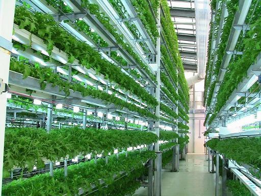 在农业结构重组和新农村建设中创造突破 - ảnh 1