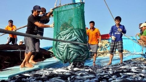 越南按欧委会劝告逐步开展整顿 保障渔业负责任和可持续发展 - ảnh 1