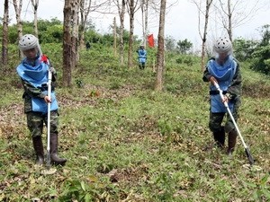 Delegation der Organisation Peace Trees Vietnam besucht Vietnam - ảnh 1